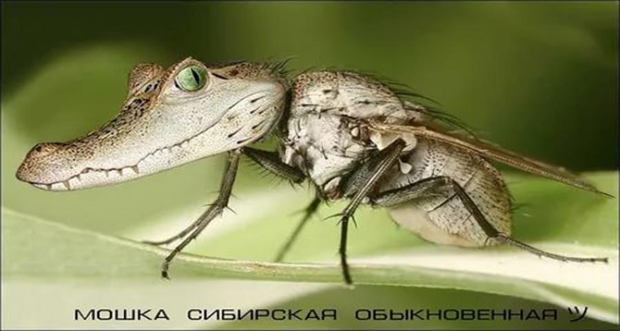 Рубцовск атаковала мошка. Как защититься?