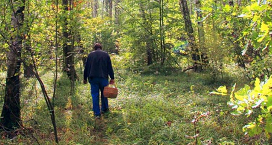 Как подготовиться к выходу в лес? Как вести себя, чтобы не заблудиться?